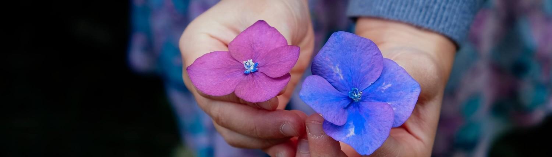 בחורה מחזיקה שני פרחים בגווני סגול